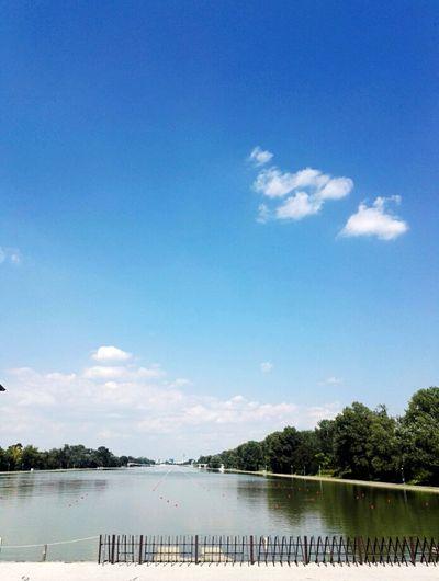 Water Tree Water Bird Lake Blue Sky Cloud - Sky Landscape