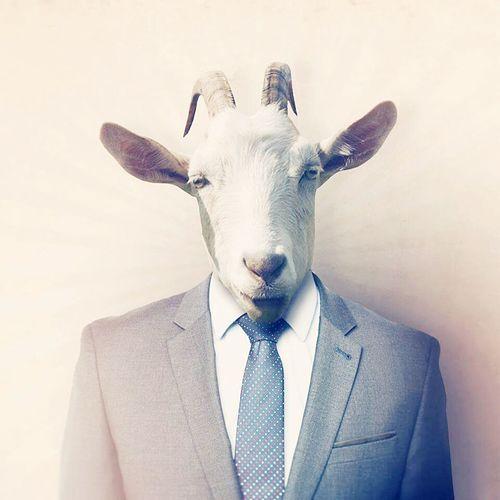 goat. james goat God HERO Legend Protected Areas Bro