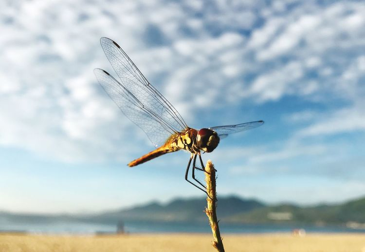 Insect Animal Themes Focus On Foreground One Animal Day Animals In The Wild Close-up Outdoors Nature No People Damselfly Sky Dragonfly EyeEmNewHere
