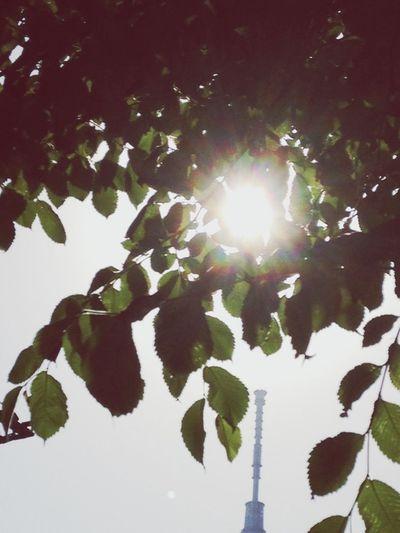 Enjoying Life EyeEmBestPics Light And Shadow EyeEm Nature Lover Sky Collection Sunshine Goodmorning Skytree 初夏