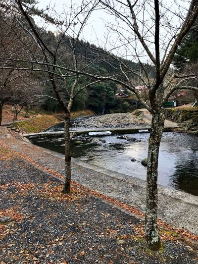 down below the waterfall Kusu, Japan Cloudy Morning Tree Bare Tree Water Nature No People River Outdoors Sky Day Branch Landscape Autumn Tranquil Scene Scenics Tranquility Beauty In Nature