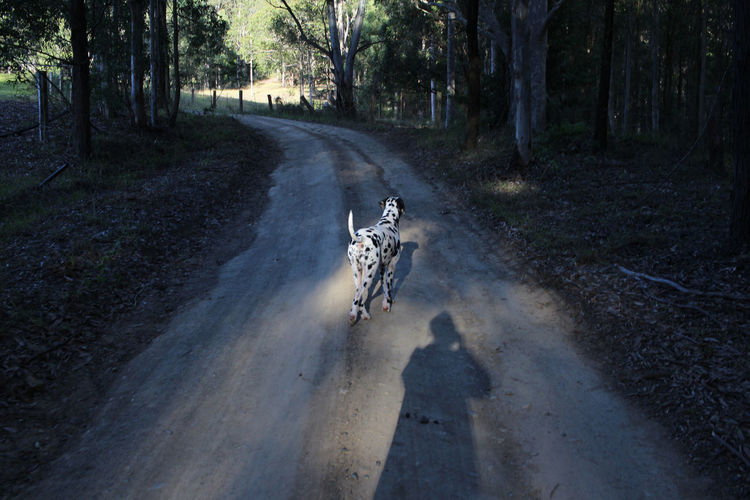 View of horse on dirt road in forest