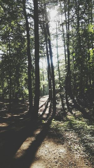 Tree Sunlight Shadow Forest Nature Outdoors WoodLand Beauty In Nature Landscape Day EyeEm Best Shots EyeEm Nature Lover First Eyeem Photo Trees And Nature Baltic Sea No People Scenics Summer Beauty In Nature EyeEm Best Shots - Nature Poland Wood WoodLand Shadows & Lights Magic Forest