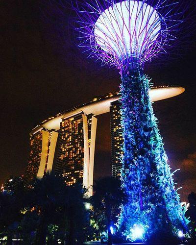 🌃 집가는 길, 생각나서. 싱가포르 싱가폴 야경 풍경 가든스바이더베이 여행 해외여행 빈카메라 Singapore Night Landscape Gardensbythebay Travel Trip Bincamera
