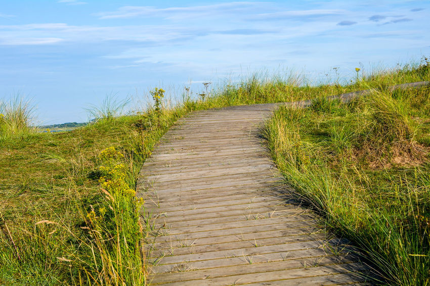 North Norfolk coastline scenes. Footpath Beauty In Nature Day Field Grass Green Color Growth Marram Grass Nature No People Outdoors Plant Scenics Sky The Way Forward Tranquil Scene Tranquility Walkway Water Way Ahead Wood Paneling
