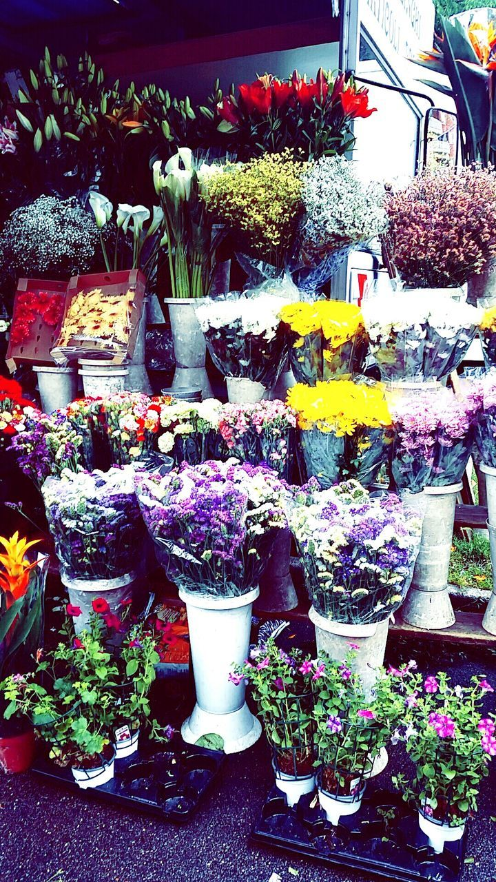 flower, retail, plant, variation, choice, for sale, store, growth, freshness, flower market, outdoors, multi colored, day, abundance, flower shop, nature, no people, large group of objects, fragility, beauty in nature