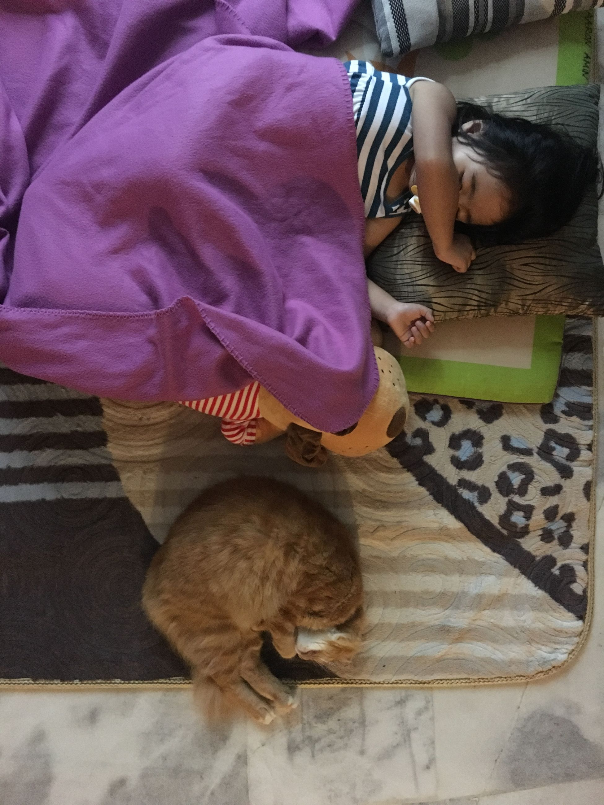 one animal, domestic animals, pets, one person, mammal, domestic, childhood, vertebrate, sleeping, child, furniture, full length, casual clothing, high angle view, lifestyles, indoors, relaxation, flooring, domestic cat, innocence