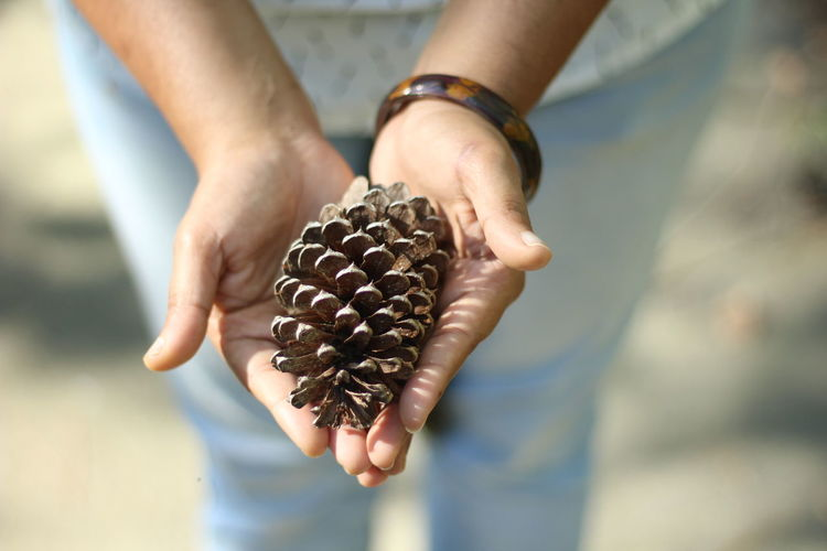 Close-Up Of Hands Holding Pine Cone