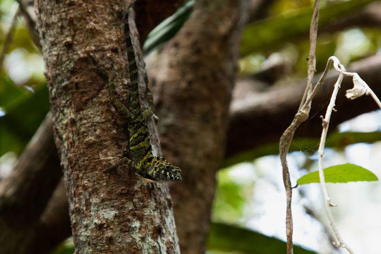lizard Tree
