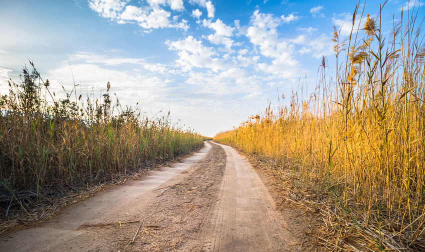path way Rural Scene Cereal Plant Sunset Panoramic Autumn Summer Agriculture Road Field Sky