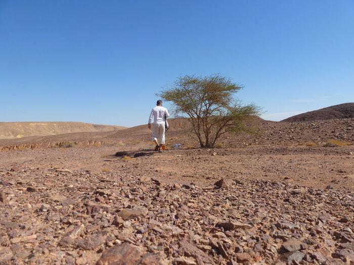Rear view of man walking on desert against clear blue sky