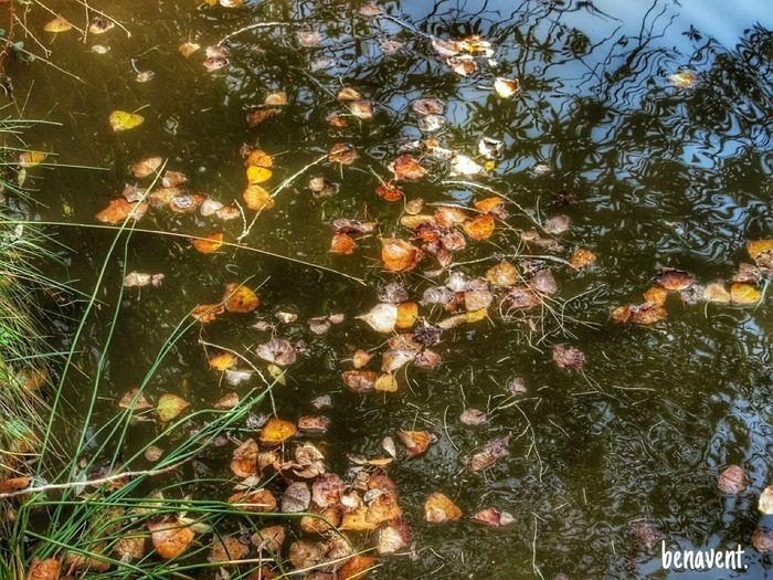 Tardor Tardor/Autumn Otoño 🍁 Autumn Autumn Leaves Fulles De Tardor Hojas De Otoño País De L'olivera Serpis