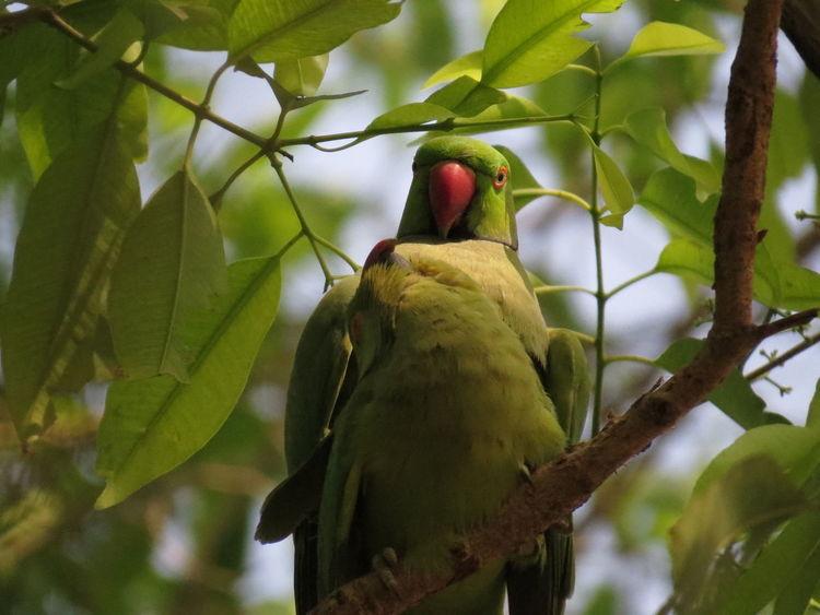 Parrot love! Chemistry Bird Photography Allgreen