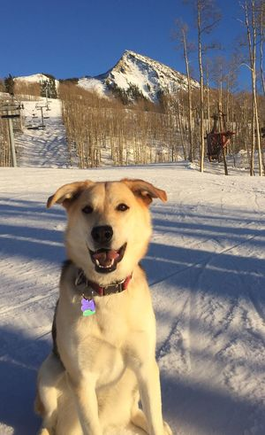 Sundog Ski Day: Pet Portraits Snow Winter Cold Temperature Animal Themes No People Shepsky Dog