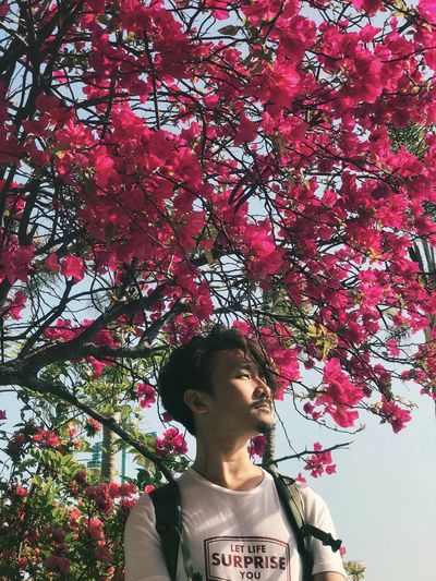 Let life surprise you. Feeling Good Power Springtime Life Anticipation Looking Into The Future Forward Plant Tree Lifestyles Flowering Plant One Person Flower Portrait Front View Low Angle View Inner Power