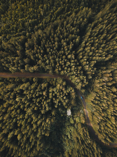 Full Frame No People Backgrounds Day Nature Aerial View Beauty In Nature Pattern High Angle View Outdoors Softness Wool Textile Plant Tranquility Green Color Sunlight Land Tree