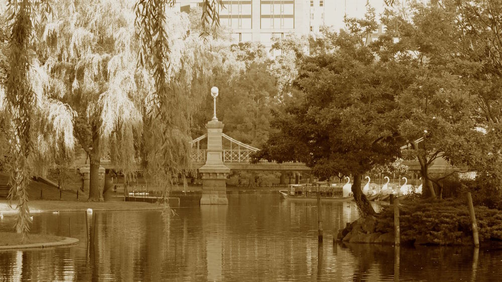 Serene take of the Boston Public Garden captured in Sepia tones. Architecture Beauty In Nature Boston Boston Public Garden  Built Structure City Park Day Growth Lake Nature No People Outdoors Park Reflection 43 Golden Moments Scenics Sepia Sepia_collection Fine Art Photography Tranquil Scene Tranquility Travel Destinations Tree Water Water Reflections