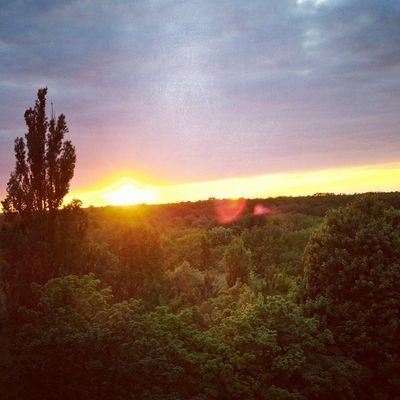 Jüterbog Sonnenuntergang Sonne Himmel Bäume Rot Gelb