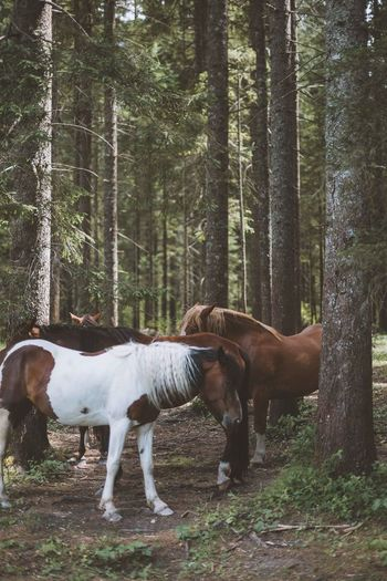 Animal Themes Day Domestic Animals Forest Horse Mammal Nature No People Outdoors Tree