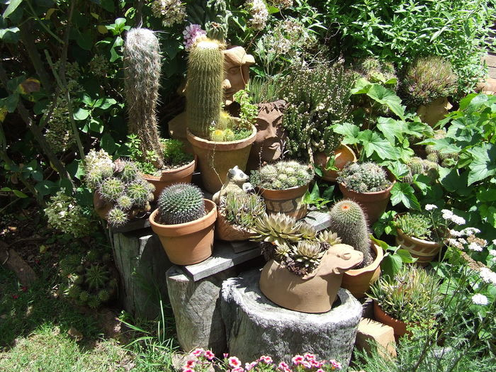 front garden home Beauty In Nature Cactus Day Front Or Back Yard Growth Nature No People Outdoors Plant Potted Plant