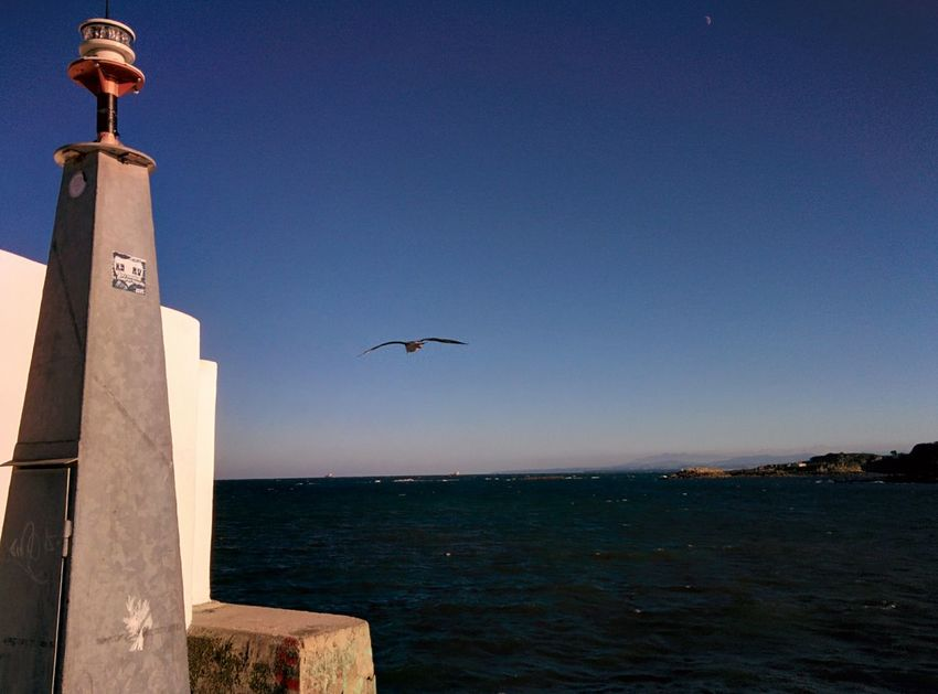 Animals In The Wild Bird Clear Sky Day Flying Lighthouse Ocean View One Animal Sea Seagull Sky