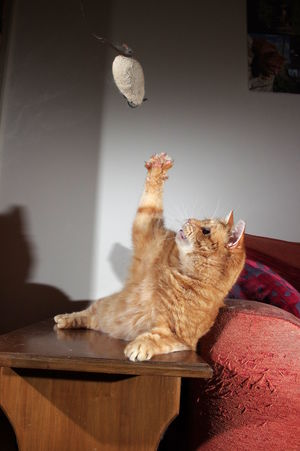 Touched by the hand of cat Animal Themes Cat Domestic Animals Domestic Cat Feline Ginger Cat Home Interior Indoors  Mammal No People One Animal Pets Toy Mouse