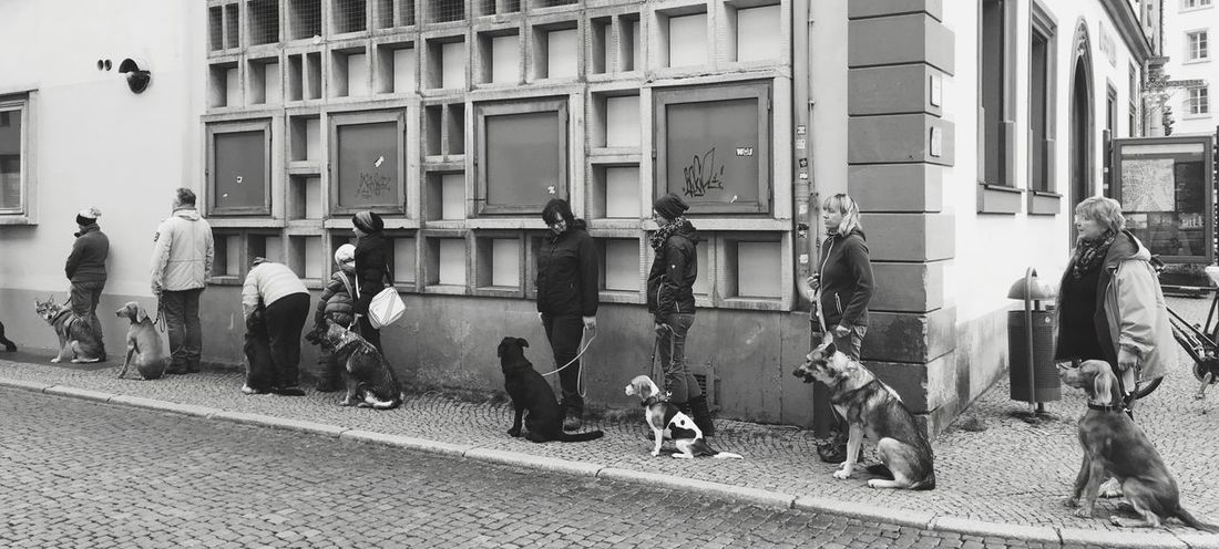 Dogs Animals Weimar School First Eyeem Photo Row Of Things People Blackandwhite Black & White Blackandwhite Photography Discipline First Eyeem Photo