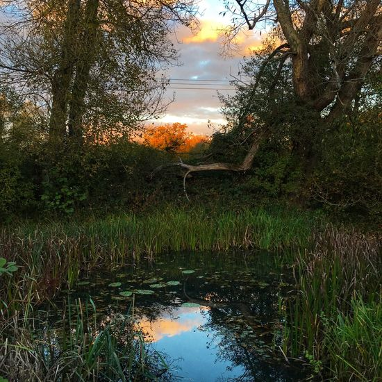 Pond reflections Pond Water Plant Reflection Tree Sky Nature Beauty In Nature Tranquil Scene