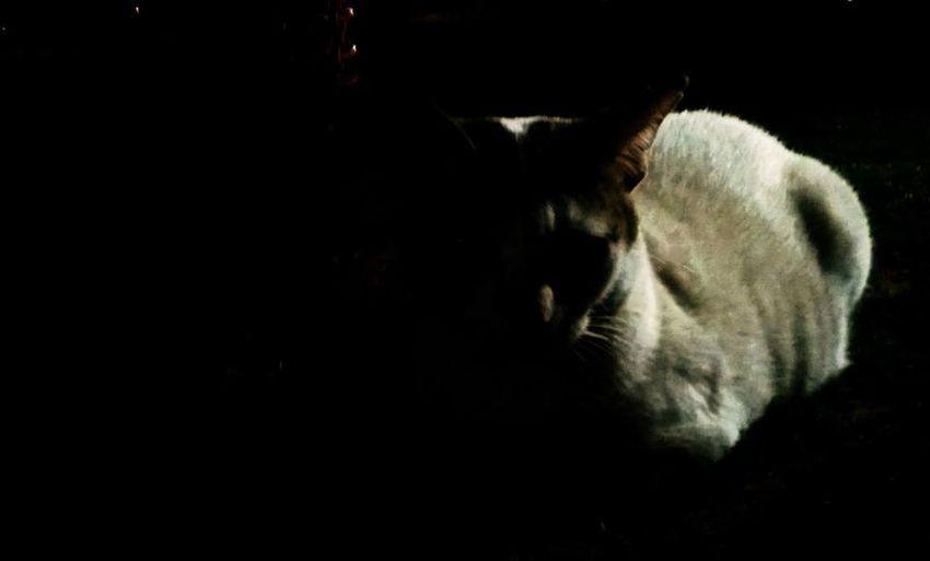 Mumbai Popular Animal Cat Nightphotography Dark