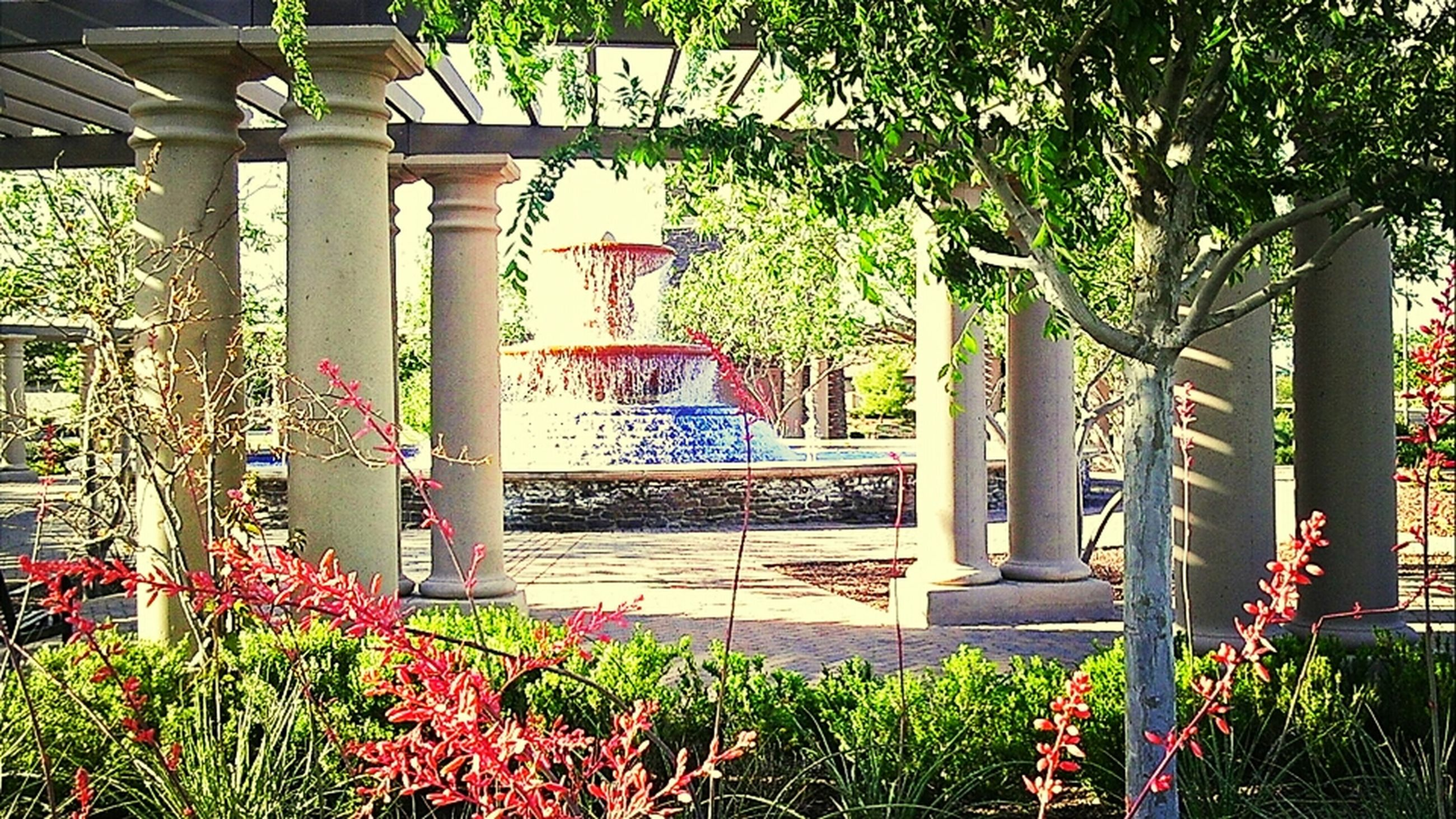 plant, flower, built structure, growth, tree, architecture, building exterior, potted plant, red, green color, formal garden, nature, day, park - man made space, outdoors, house, entrance, leaf, no people, architectural column