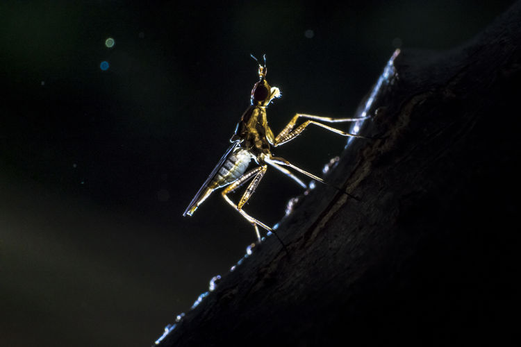 Life Animal Animal Body Part Animal Themes Animal Wildlife Animals In The Wild Arachnid Arthropod Close-up Focus On Foreground Insect Invertebrate Macro Nature Night No People One Animal Outdoors Selective Focus Spider Zoology EyeEmNewHere