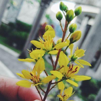 Vscocam Vscobest Instaesia Lenovoesia kamerahpguevsco.com Ketika bunga tumbuh ditempat yang layak maka dia akan indah dipandang, dan jika bunga tumbuh ditempat yang tidak layak maka dia tidak indah dipandang. Begitu juga manusia. Dunia ini kejam ? happy monday everybody.