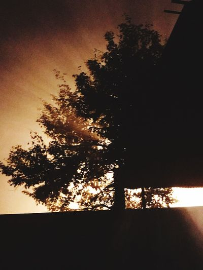 Tindle Night Tree Silhouette No People Nature Sky Sunset Growth Beauty In Nature Scenics Tranquility Outdoors