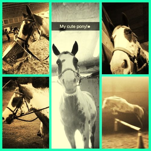 Wish I Was With My Horse Right Now!