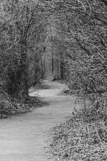 Old Railway Line Path Tree Ashton Under Lyne Blackandwhite Blackandwhite Photography Old Railway Old Railways Swirly Path Tameside
