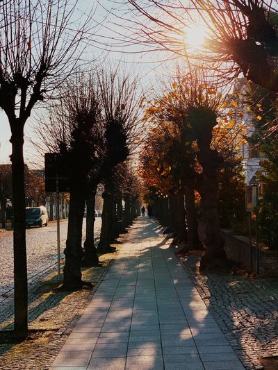 Tree Plant The Way Forward Nature Direction Sunlight No People Shadow Outdoors Footpath Architecture Growth Sunset Beauty In Nature