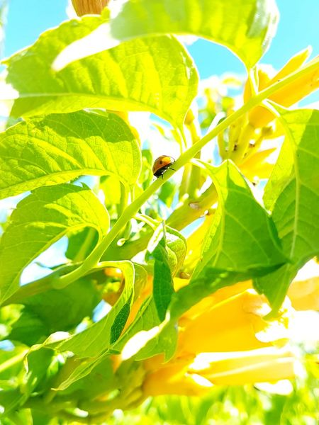 Leaf Tree Flower Sunlight Summer Close-up Sky Plant Animal Themes Green Color EyeEmNewHere