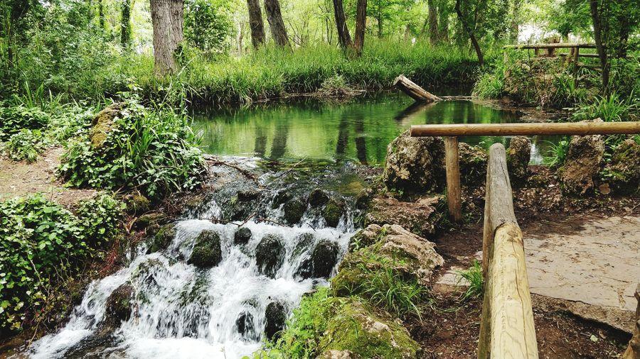 Cascada Op5t EyeEmNewHere Agua Cascada Naturaleza Water Tree Reflection