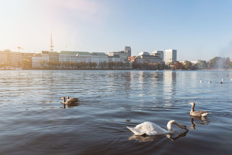 Birds swimming in river against sky