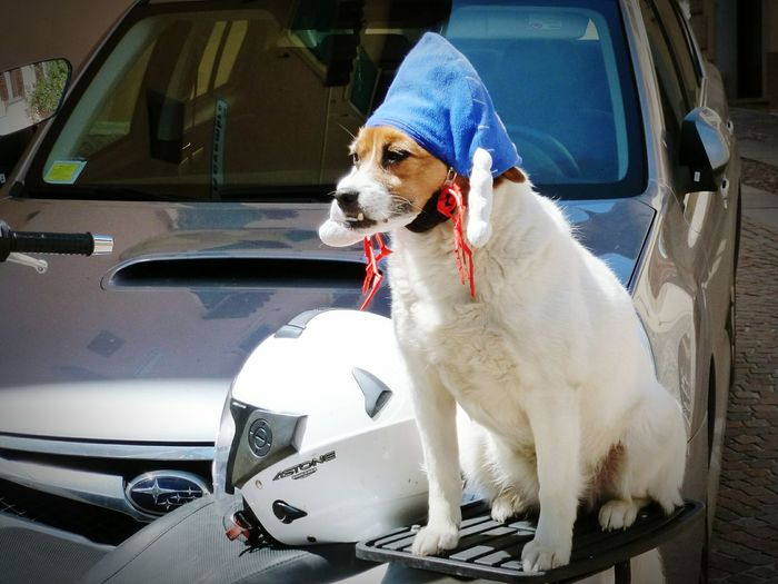 Dog Dog With Hat Dog Riders Dog On Motorcycle Motorcycle Mütze Lago Di Garda Gardasee Italia Italy❤️ Fresh And Clean Animal Pet