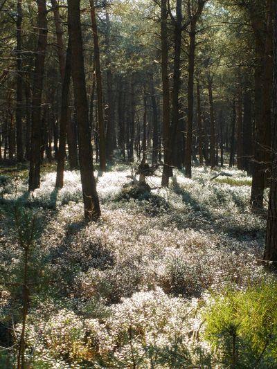 An overgrown