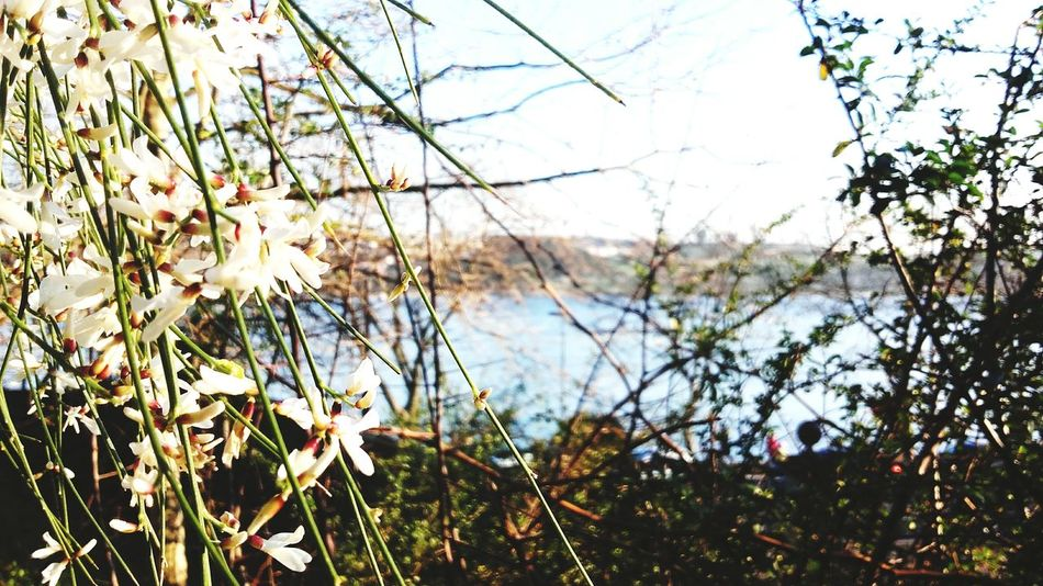 Nature Beauty In Nature Tree Oporto, Portugal Flowers Sky City Douro River, Blue Sky