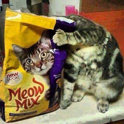 Illusion Funny Cat Instagood instamod turkey happy animal