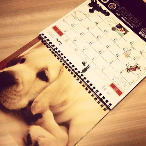 Taiwan Guide Dog Association Guidedog Calendar