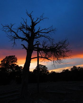 Sunset Tree Silhouette Nature Landscape Tree Trunk Beauty In Nature Outdoors Sky Newmexicosunset NewMexicoTRUE Newmexicophotography Newmexicoskies