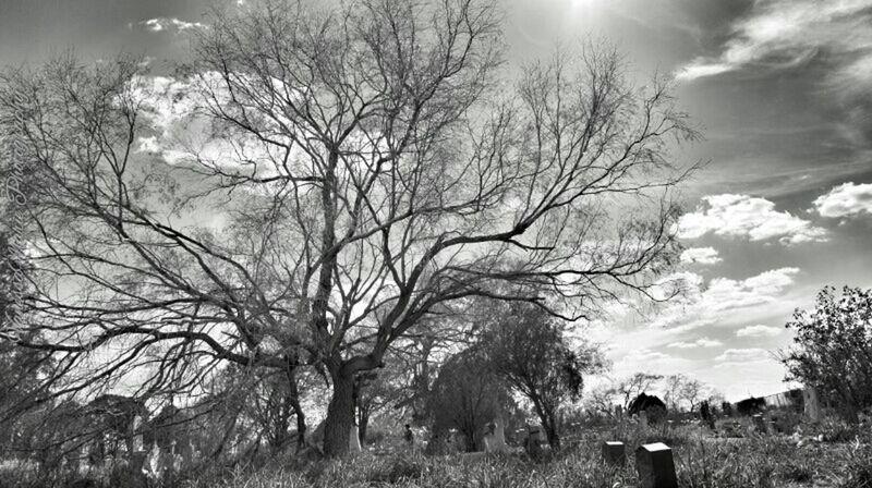 Nature Blackandwhite Black And White Landscape Tree Black & White Cemetery Sony Landscape Photography Sonynex Cemeteryscape SonyNex3