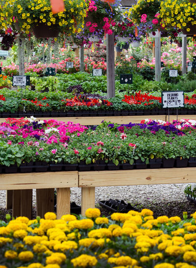 garden stores are the best place to be in the spring Beauty In Nature Day Flower Flower Head Flowerbed Fora And Fauna Fragility Freshness Garden Store Growth Multi Colored Nature No People Outdoors Plant Plant Nursery Plant Sale Springtime Variation Yellow