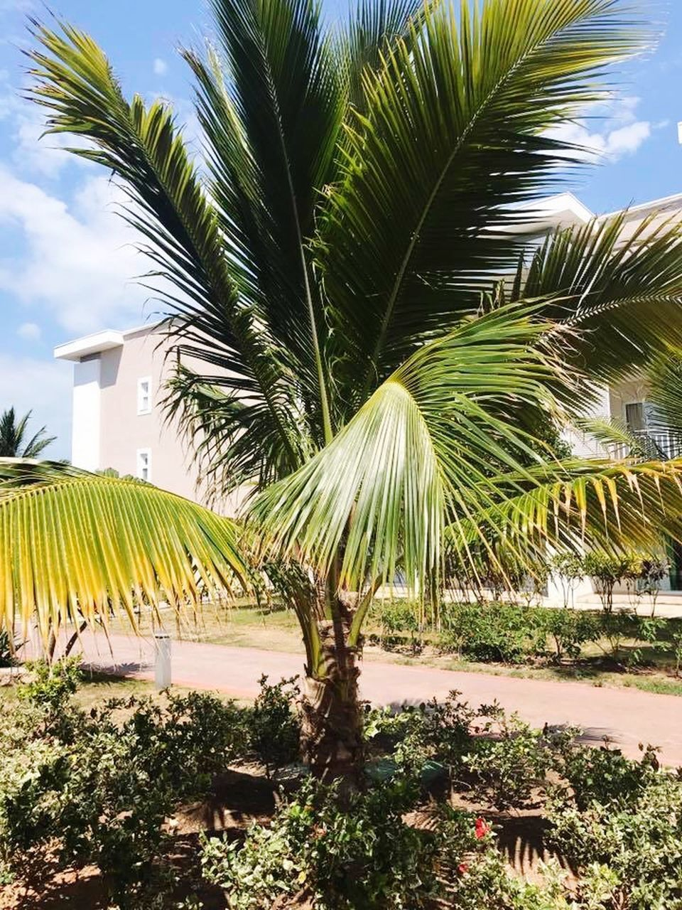 PALM TREES BY PLANTS