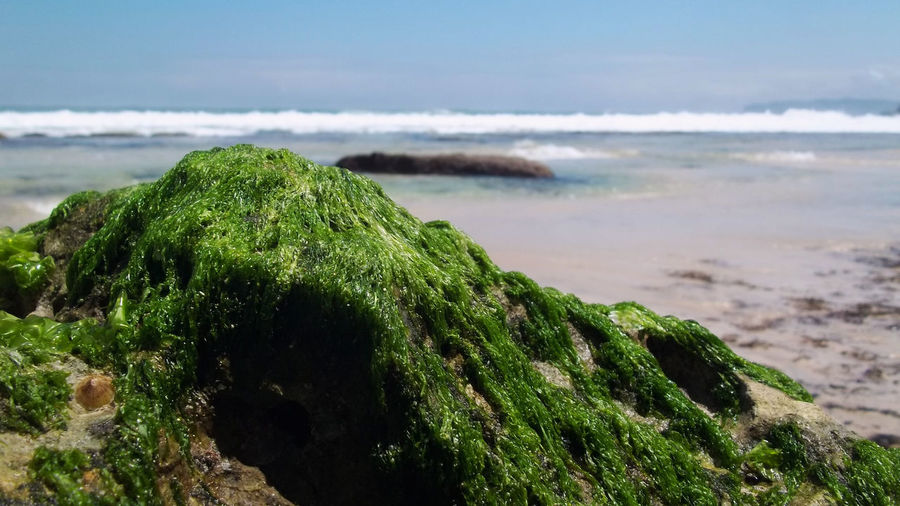 Nature Sea View Nature Photography Beach Beauty In Nature Close-up Day Green Color Green Moss Horizon Over Water Moss Mossy Rock Mossy Stone Mosy Nature No People Outdoors Rijall Rijall Blues Rijallblues Scenics Sea Sky Tranquil Scene Tranquility Water Wave
