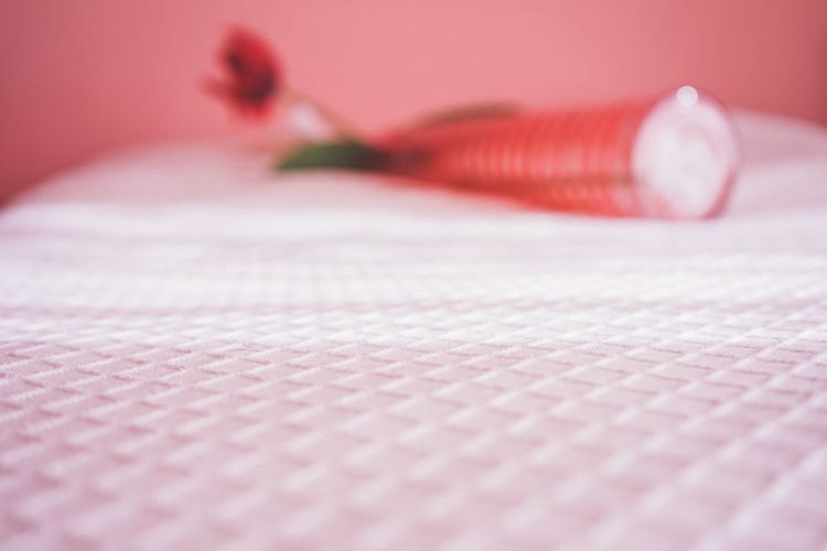 Close-up of pink flower on table